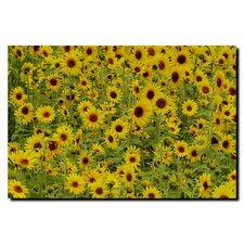 "<strong>Trademark Fine Art</strong> A Sunflower Day by Kurt Shaffer, Canvas Art - 24"" x 32"""
