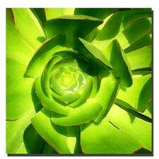 """Succulent Square Close Up"" Canvas Art"
