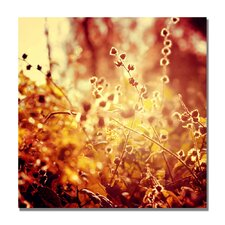 "<strong>Trademark Fine Art</strong> ""Sunset in My Garden"" Canvas Art"
