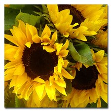 "<strong>Trademark Fine Art</strong> ""Sunflowers"" Canvas Art"