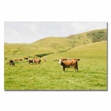 "<strong>Trademark Fine Art</strong> ""Cow Staredown"" Canvas Art"