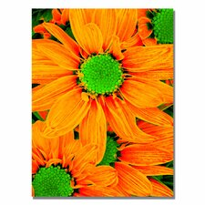 "<strong>Trademark Fine Art</strong> ""Pop Daisies X"" Canvas Art"