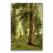 "<strong>Trademark Fine Art</strong> ""California Redwoods"" Canvas Art"