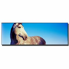 <strong>Trademark Fine Art</strong> 'Kentucky White Horse' Canvas Art