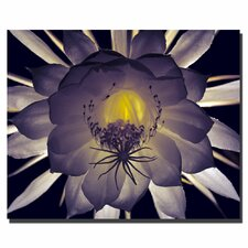 <strong>Trademark Fine Art</strong> 'Floral Contrast' Canvas Art