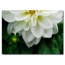 'White Dahlia' Canvas Art