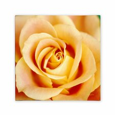<strong>Trademark Fine Art</strong> 'Antique Rose' Canvas Art