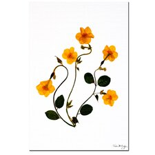 <strong>Trademark Fine Art</strong> 'Dancing Daffodils' Canvas Art