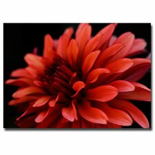 'Red dahlia' Canvas art