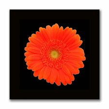<strong>Trademark Fine Art</strong> 'Orange Gerber Daisy' Canvas Art