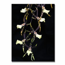 <strong>Trademark Fine Art</strong> 'Spider Orchid on Black' Canvas Art
