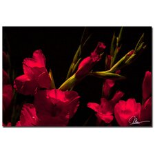 <strong>Trademark Fine Art</strong> 'Gladiolus II' Canvas Art