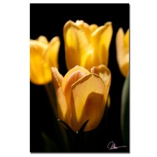 <strong>Trademark Fine Art</strong> 'Tulips Blooms V' Canvas Art