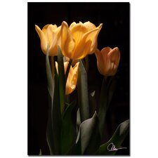 <strong>Trademark Fine Art</strong> 'Tulips Blooms VI' Canvas Art