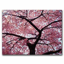 <strong>Trademark Fine Art</strong> CATeye 'Cherry Tree' Canvas Art