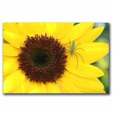 <strong>Trademark Fine Art</strong> 'Sunflower' Canvas Art