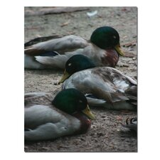 <strong>Trademark Fine Art</strong> 'Duck Slumber' Canvas Art