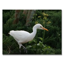 <strong>Trademark Fine Art</strong> 'Egret' Canvas Art