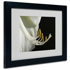 "<strong>Trademark Fine Art</strong> ""Intimate Amaryllis"" Framed Art"
