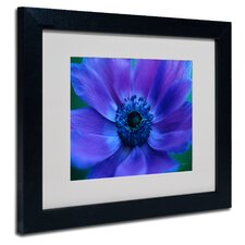 """Beautiful Anemone"" by Kathy Yates Framed Painting Print"