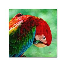 "<strong>Trademark Fine Art</strong> ""Colorful Macaw Square Format"" Canvas Art"