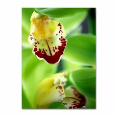 "<strong>Trademark Fine Art</strong> ""Cymbidium Seafoam Emerald Orchid"" Canvas Art"