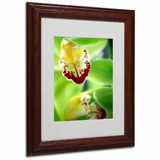 """Cymbidium Seafoam Emerald Orchid"" Matted Framed Art"