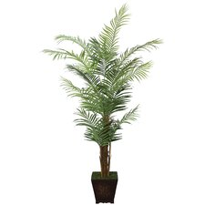 Realistic Areca Palm Tree in Decorative Vase