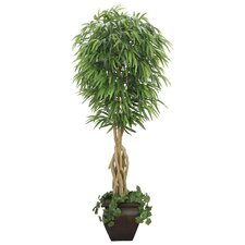 Realistic Willow Ficus Tree in Planter