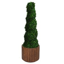 <strong>Laura Ashley Home</strong> Tall Preserved Spiral Boxwood Round Topiary in Planter