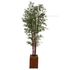 Tall Harvest Bamboo Tree in Fiberstone Planter