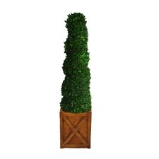 <strong>Laura Ashley Home</strong> Tall Preserved Spiral Boxwood Square Topiary in Planter