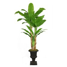 Tall Banana Tree with Real Touch Leaves in Fiberstone Planter