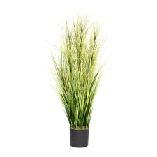 <strong>Laura Ashley Home</strong> Onion Grass in Cylinder Pot