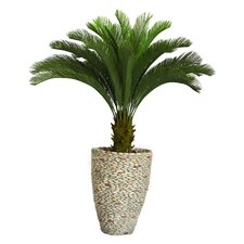 Tall Cycas Palm Tree in Fiberstone Planter