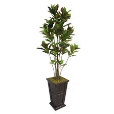 <strong>Laura Ashley Home</strong> Tall Croton Multiple Trunks Tree in Planter