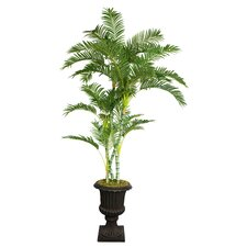 Tall Palm Tree in Urn
