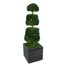 Tall Preserved Spiral Boxwood Cone Square Topiary in Planter