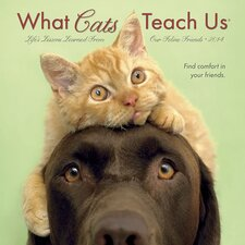 What Cats Teach Us 2014 Mini Calendar