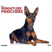 Mini Pinschers 2014 Wall Calendar