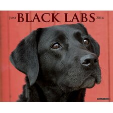 <strong>Willow Creek Press</strong> Black Labs 2014 Wall Calendar