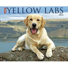 Just Yellow Labs 2014 Wall Calendar