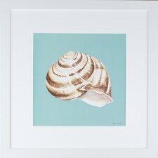 Seaside Living Shell on Aqua I Framed Graphic Art