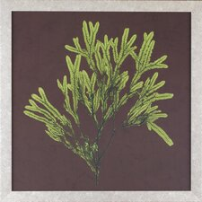 <strong>Indigo Avenue</strong> Seaside Living Dramatic Kelp I Framed Wall Art