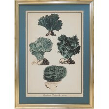 <strong>Indigo Avenue</strong> Seaside Living Coral Species I Framed Wall Art