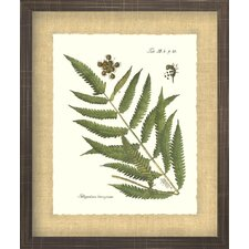 <strong>Indigo Avenue</strong> Floral Living Antique Fern 2 Framed Wall Art