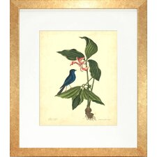 <strong>Indigo Avenue</strong> Floral Living Catesby Bird and Botanical IV Framed Wall Art