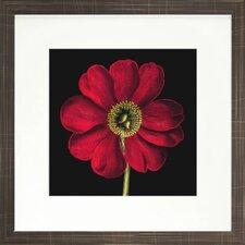 Floral Living Dramatic Bloom I Framed Graphic Art