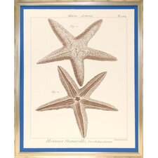 Seaside Living Striking Starfish I Framed Wall Art