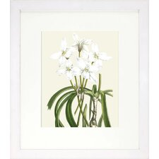 Floral Living Les Fleurs Blanches III Framed Graphic Art